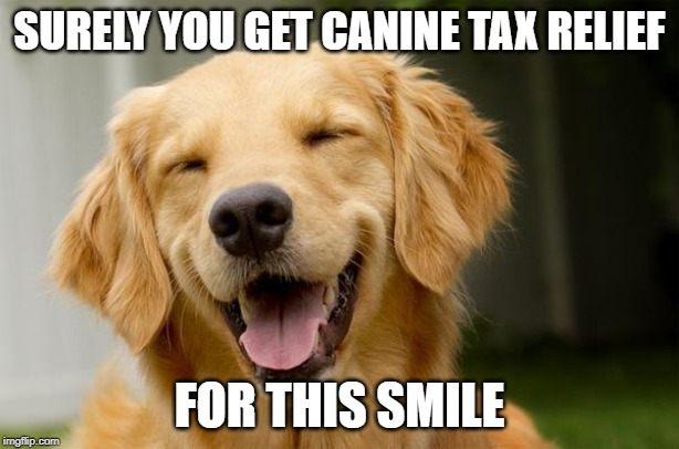 Is a dog your best friend or a tax-deductible expense?